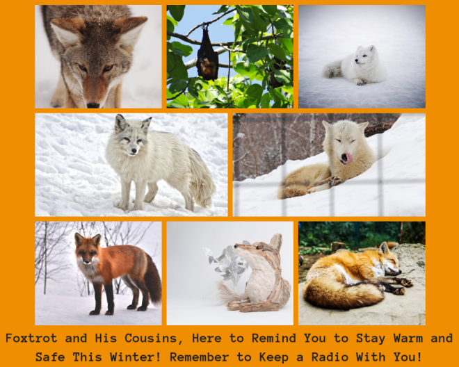Foxtrot and His Cousins, Here to Remind You to Stay Warm and Safe This Winter